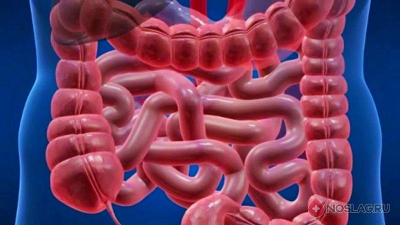 Очищение организма от шлаков и токсинов: препараты 17.1-3