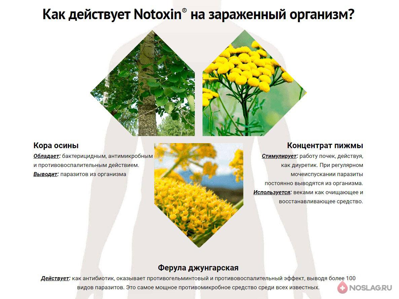 Notoxin в аптеке nt4